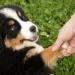 Thumbnail for Responsible Pet Ownership